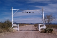 Slaughter-Ranch-10-1124-13