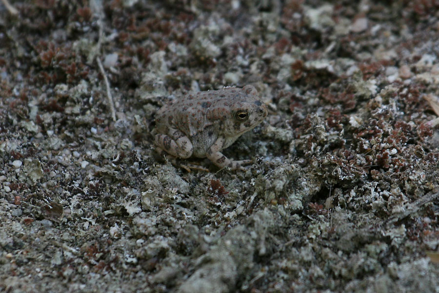 Woodhouses-Toad-St-David-11-0621-02