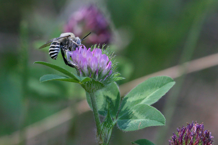 Cutter-bee-sp-Walnut-Creek-11-0625-02